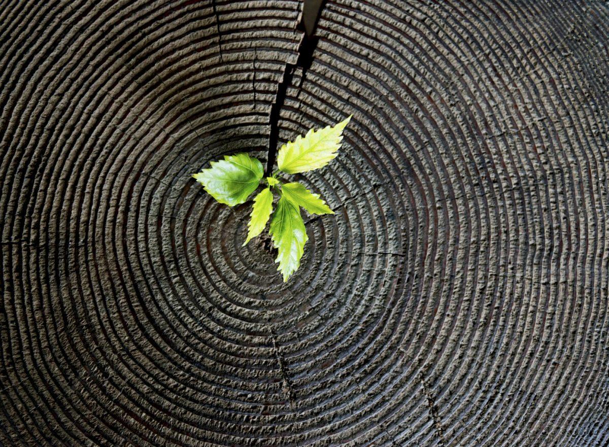 Environmental Factors of Sober Living | Transcend Texas